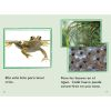 Time for Kids® Informational Text - 30 Books - Grade 1 - Spanish