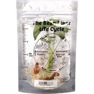 The Bean Plant Life Cycle Baggies