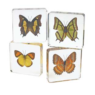 Excellerations Acrylic Butterfly Specimens - Set of 4