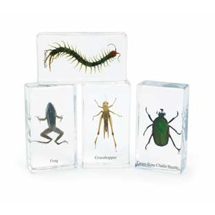 Excellerations Acrylic Garden Friends - Set of 4