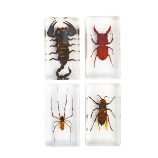 Excellerations Acrylic Scary Bug Specimens - Set of 4