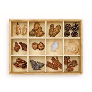 Excellerations® Wooden Specimen Kit