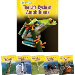 Life Cycles - 6-Book Set
