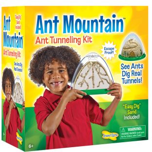 Ant Mountain - 1 multi-item kit