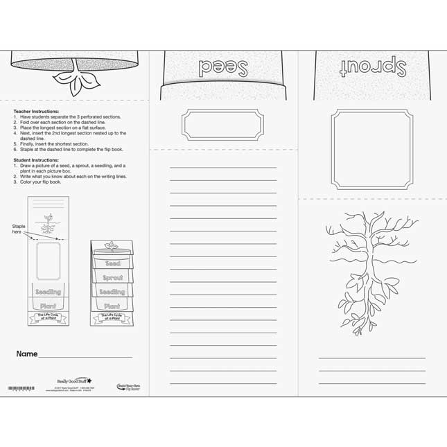 Build Your Own Flip Books™ - Life Cycle Of A Plant - 24 flip books
