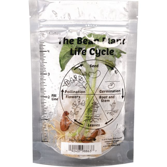 The Bean Plant Life Cycle Baggies - 24 plastic bags