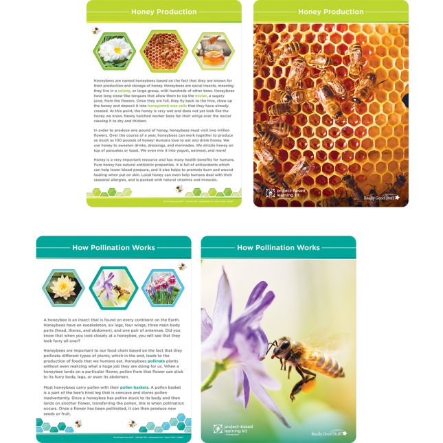 Project-Based Learning Kit  Honeybees