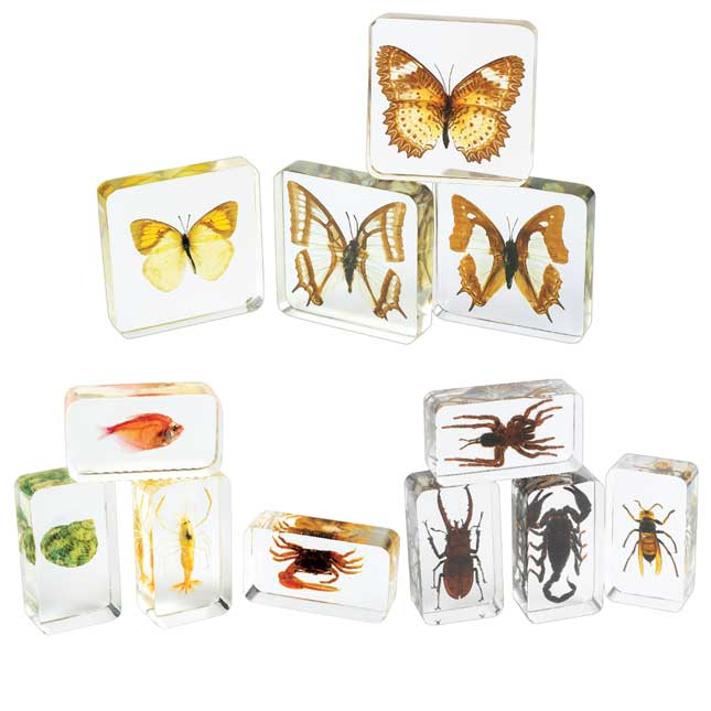 Excellerations Acrylic Specimens Science Collection Set of 12