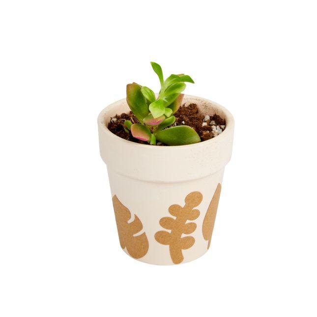 Colorations Ceramic Flowerpots Set of 12