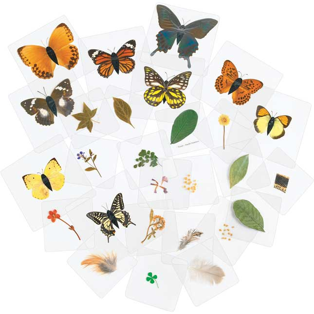 Excellerations Laminated Specimen Set 28 Pieces