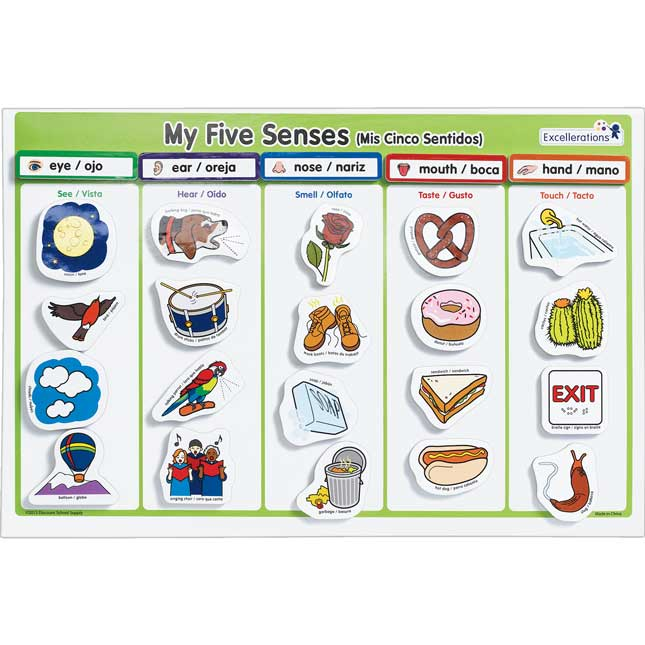 Excellerations My 5 Senses Magnet Activity Set
