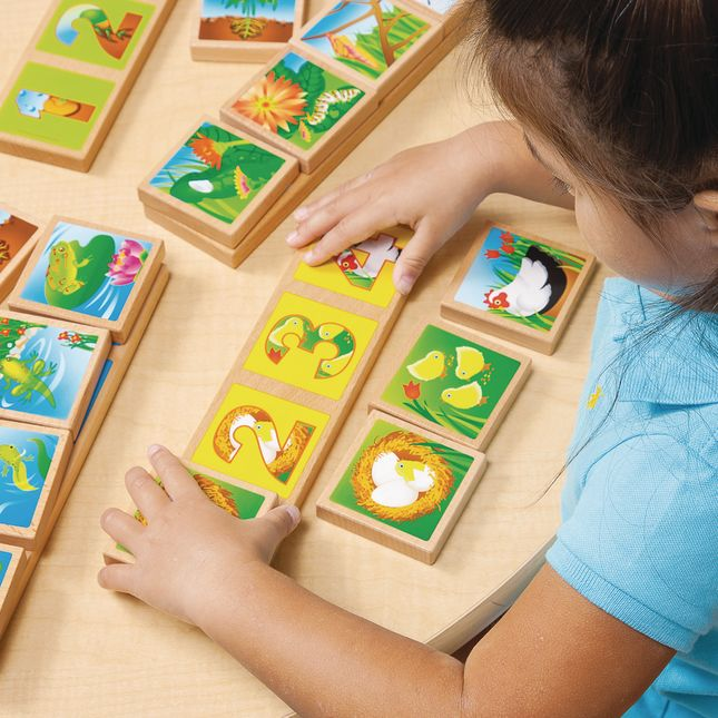Environments earlySTEM Life Cycles Sequencing Lotto - 4 boards