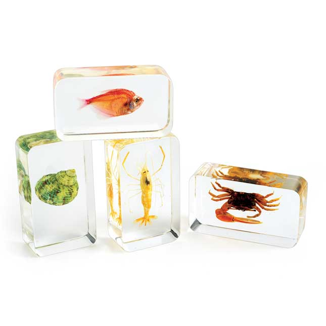 Excellerations Acrylic Under the Sea Specimens Set of 4