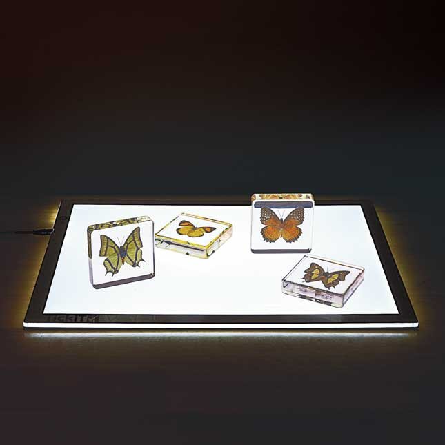 Excellerations Acrylic Butterfly Specimens Set of 4