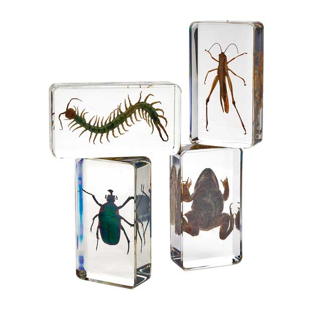 Excellerations Acrylic Garden Friends Set of 4