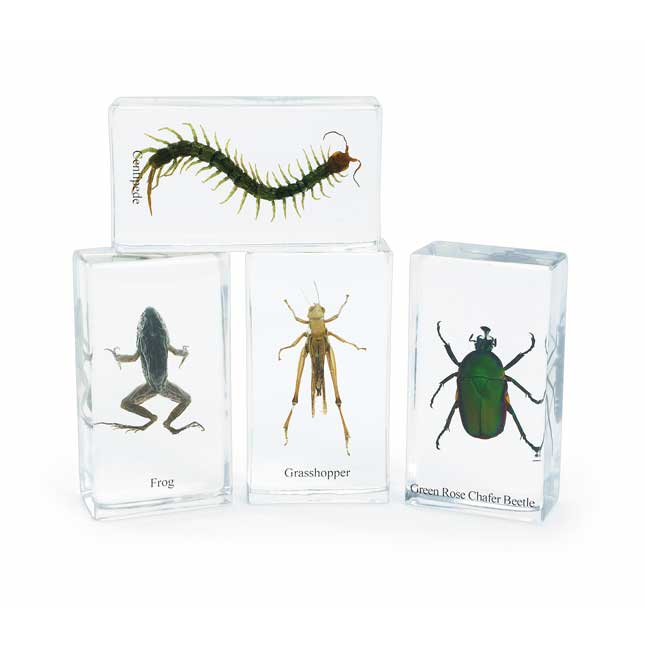 Excellerations Acrylic Specimens Set of 12
