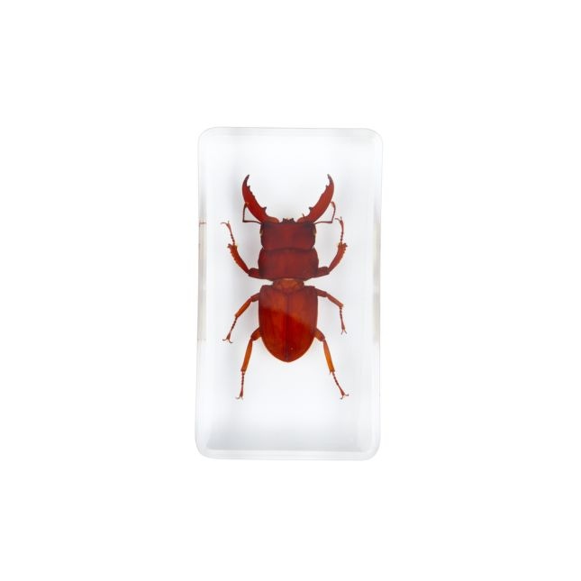Excellerations Acrylic Scary Bug Specimens Set of 4