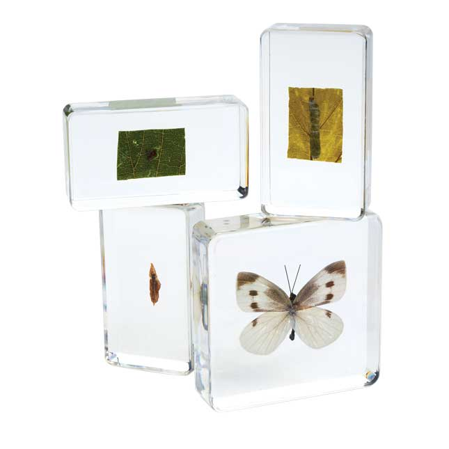 Excellerations Acrylic Life Cycle Specimens Set of 4