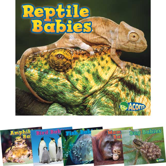 Animal Babies 6-Book Set