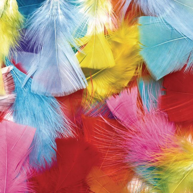 Colorations Rainbow Feathers Classroom Pack 8 oz